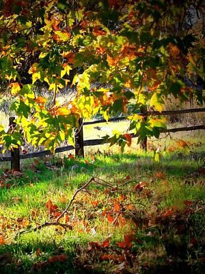 Sycamore Grove Fence 2 Art Print