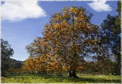 Vineyard Digital Art - Sycamore In Fall by Patricia Stalter