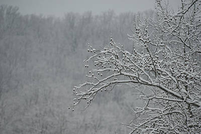 Photograph - Sycamore In Snow by Dana Sohr