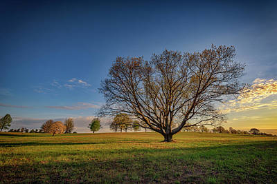 Sycamore In Valley Forge Art Print by Rick Berk