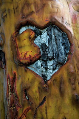 Photograph - Sycamore Love by Tikvah's Hope