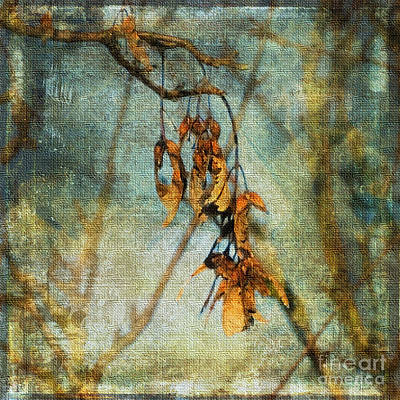 Photograph - Sycamore Seeds by Liz Alderdice
