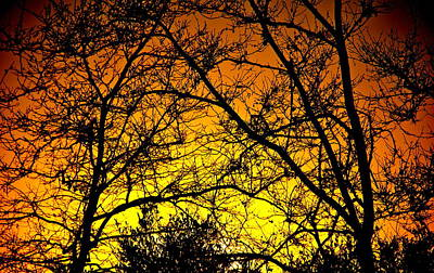 Sycamore Sunset Art Print