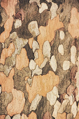 Photograph - Bark Of A Sycamore Tone by Theo O'Connor