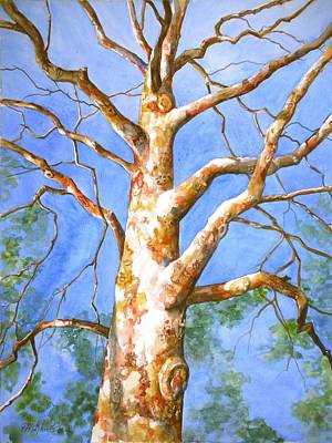 Sycamore Painting - Sycamore Tree With A Memory by Patricia Allingham Carlson