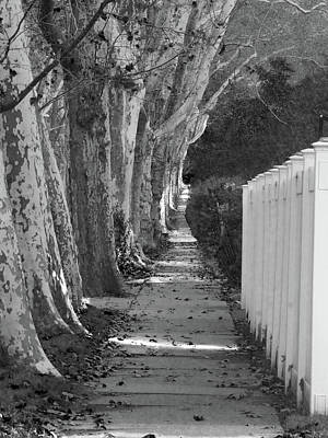 Photograph - Sycamore Walk-grayscale Version by Leon deVose