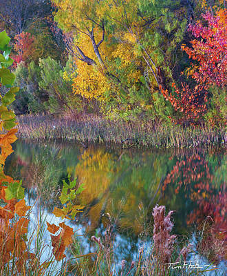 Sycamores And Willows Art Print
