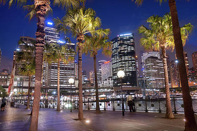 Sydney Skyline Photograph - Sydney Palm Tree by Emanuele Carlisi