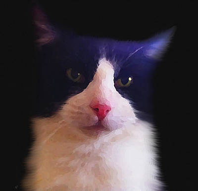 Digital Art - Sylvester Tuxedo Cat by Shelli Fitzpatrick