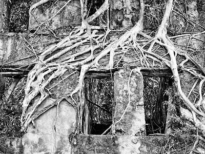Photograph - Symbiosis by Dominic Piperata
