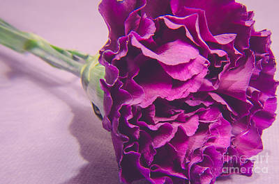 Purple Flowers Digital Art - Symbol Of Affection by Lisa Killins