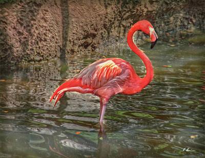 Photograph - Symbol Of Florida by Hanny Heim