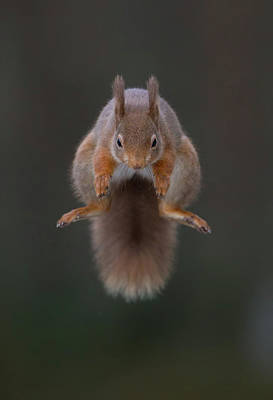 Photograph - Symmetric Squirrel by Peter Walkden