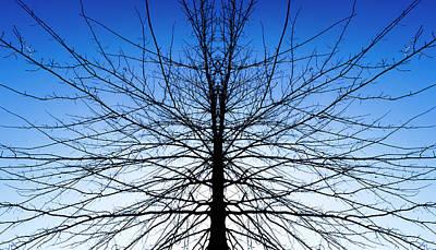 Photograph - Symmetree by Van Sutherland