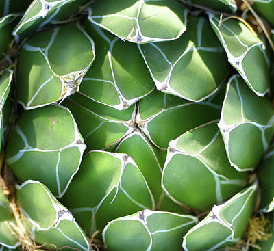 Photograph - Symmetrical Succulent by Laurel Powell