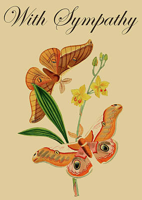 Drawing - Sympathy Condolence Cards With Sympathy Messages Butterfly Card Injete by Injete Chesoni