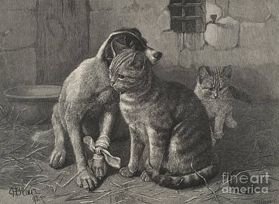 Animals Drawing - Sympathy  by English School
