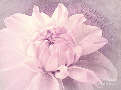 Flowers Photograph - Symphony In Pink by Angela Doelling AD DESIGN Photo and PhotoArt