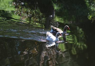 Reflectivity Photograph - Synchronised Swimming by Michaela Perryman