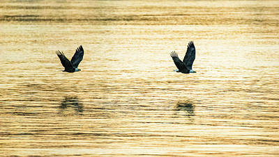 Photograph - Synchronized Bald Eagles At Dawn 2 Of 2 by Jeff at JSJ Photography