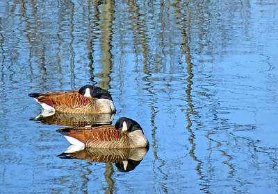 Photograph - Synchronized Geese by Carolyn Derstine