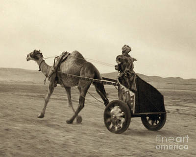 Photograph - Syria: Camel Race, C1938 by Granger