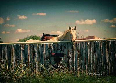 Photograph - T For Texas by Karen Slagle