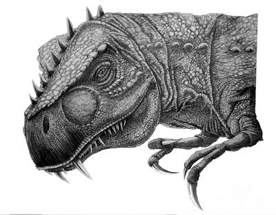 T Rex Drawing - T-rex by Murphy Elliott