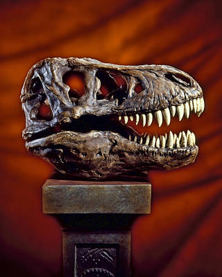Photograph - T Rex Skull by Kelley King