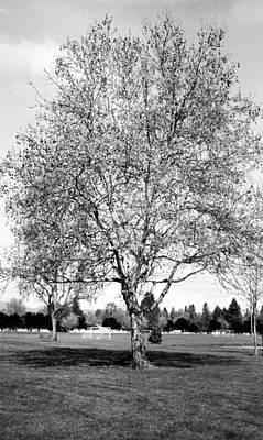 Photograph - Ta Da The Tree by Teri Schuster