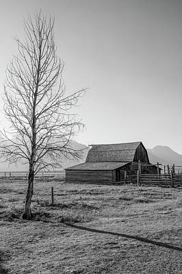 Photograph - T.a. Moulton Barn With Tree by John McGraw