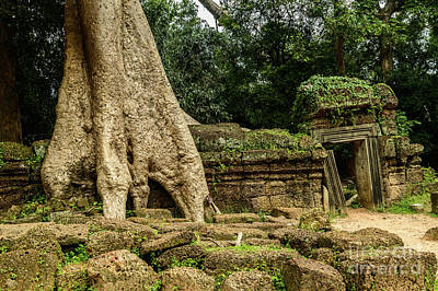 Photograph - Ta Prohm 1 by Werner Padarin