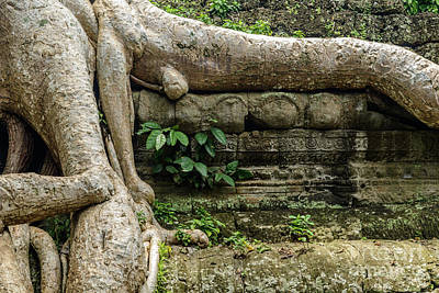 Photograph - Ta Prohm 3 by Werner Padarin