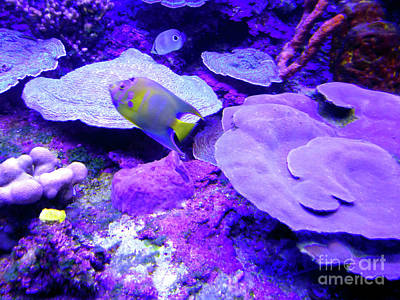Photograph - Ta Purple Coral And Fish by Francesca Mackenney