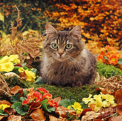 Photograph - Tabby And Autumn Gold by Warren Photographic