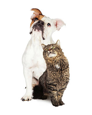 Photograph - Tabby Cat And Bulldog Together Looking Up by Susan Schmitz