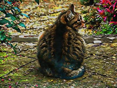 Photograph - Tabby Cat by Dorothy Berry-Lound