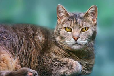 Photograph - Tabby Cat On Aqua by Nikolyn McDonald