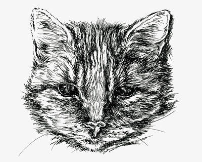 Drawing - Tabby Cat Portrait In Ink by MM Anderson