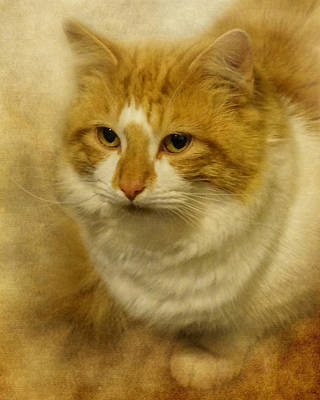 Photograph - Tabby Cat by TnBackroadsPhotos