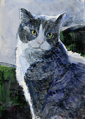 Tabby In A Blue Room Art Print
