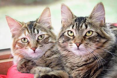 Photograph - Tabby Kittens by LeeAnn McLaneGoetz McLaneGoetzStudioLLCcom
