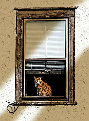 Orange Tabby Photograph - Tabby On The Sill by Diana Angstadt