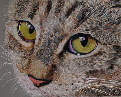 Painting - Tabby Stare by Don MacCarthy