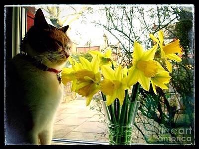 Photograph - Tabitha Admiring The Daffodils by Joan-Violet Stretch
