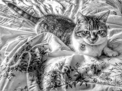Photograph - Tabitha In Greyscale 2 by Joan-Violet Stretch