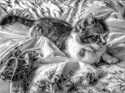 Photograph - Tabitha In Greyscale by Joan-Violet Stretch