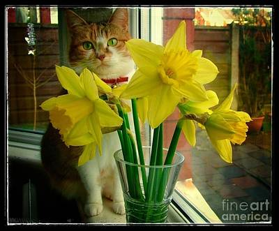 Animals Royalty-Free and Rights-Managed Images - Tabitha with The Daffodils by Joan-Violet Stretch