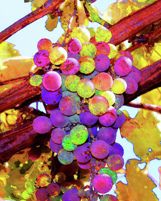 Photograph - Table Grapes by Timothy Bulone