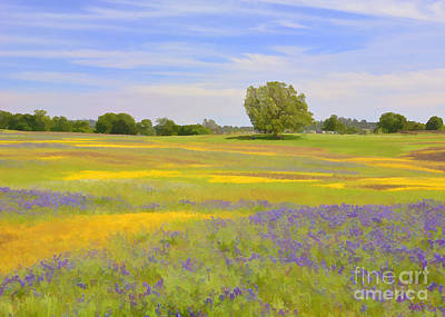 Photograph - Table Mountain Wildflowers by Kathleen Gauthier